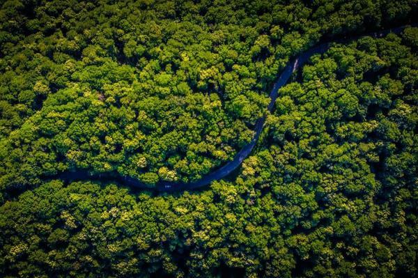 Forest Fragmentation